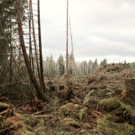 Recent logging, with the smell of saw dust and wood - Washington