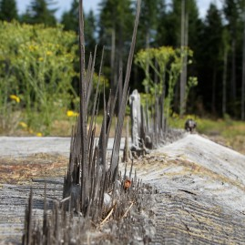 Logging - Washington